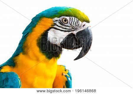 Close up shotA blue and yellow macaw.