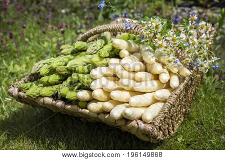 Fresh raw white and green asparagus as close-up in a basket outdoor in the grass