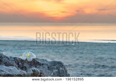 Silhouette. Plumeria Flower On The Rocks On The Beach
