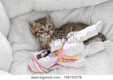 Cute little kitten playing with toy rabbit while lying in cat bed at home