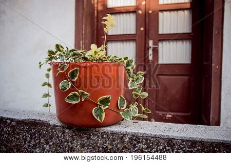 Front Door Planters brown flower pot on the fence
