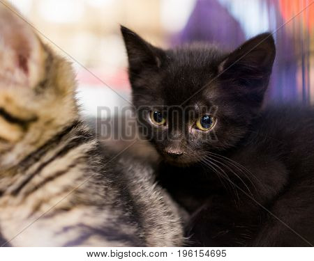 Small black kitten cuddling with siblings in cage