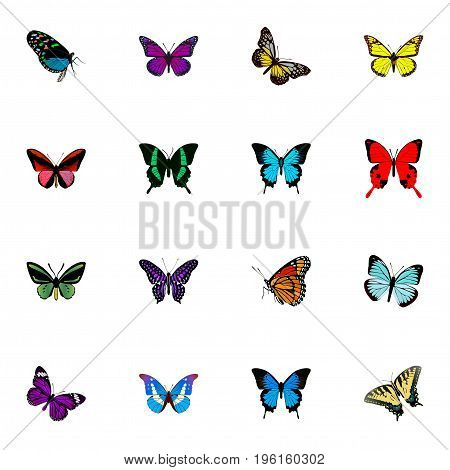 Realistic Lexias, Tropical Moth, Butterfly And Other Vector Elements