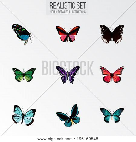 Realistic Hairstreak, Demophoon, Callicore Cynosura And Other Vector Elements