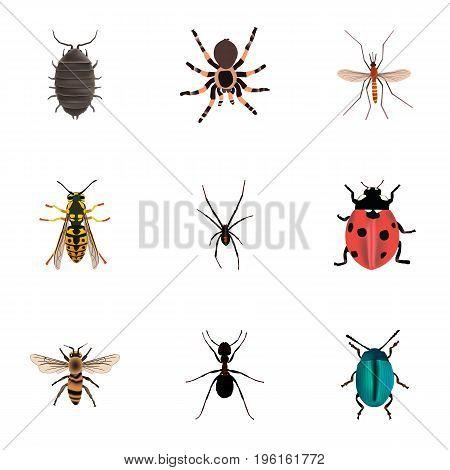 Realistic Dor, Ladybird, Tarantula And Other Vector Elements