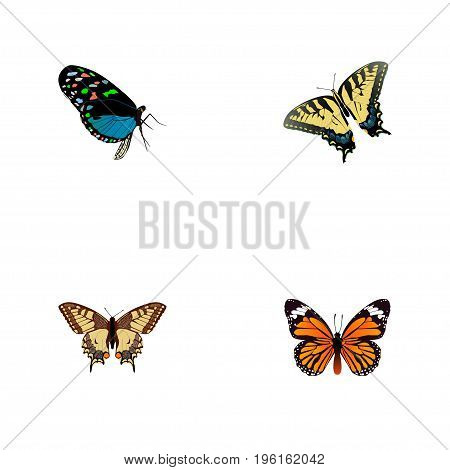 Realistic Hairstreak, Tiger Swallowtail, Monarch And Other Vector Elements