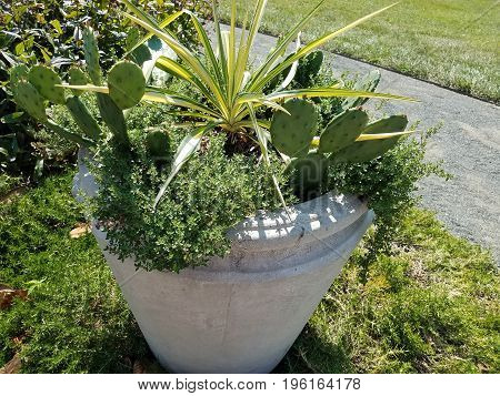 white cement flower pot with some green cactus
