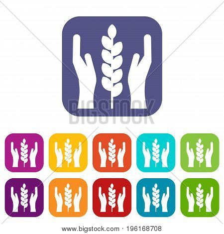 Hands and ear of wheat icons set vector illustration in flat style in colors red, blue, green, and other
