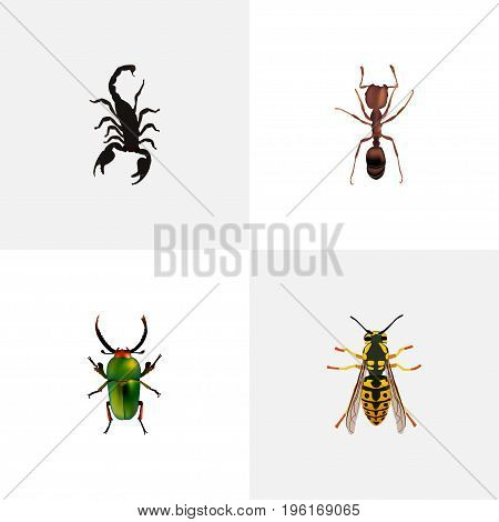 Realistic Insect, Bee, Poisonous And Other Vector Elements