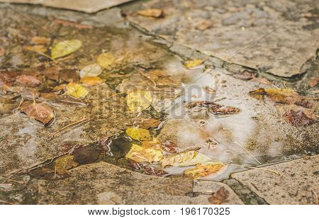 Autumn leaves in a puddle. Selective focus. Yellow seasonal colors.