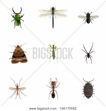 Realistic Emmet, Spinner, Insect And Other Vector Elements
