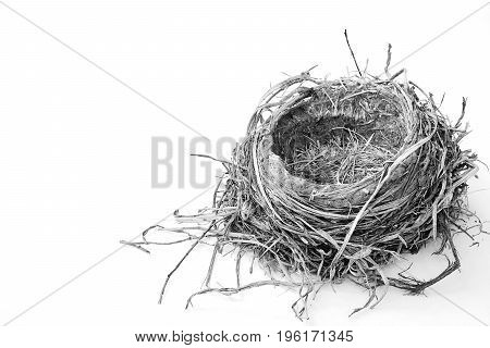 A black and white image of a Robin's nest on white background.
