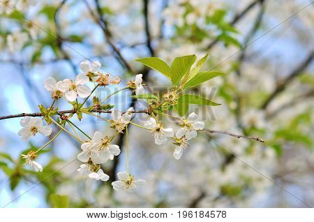 Spring flowers with blue background in garden