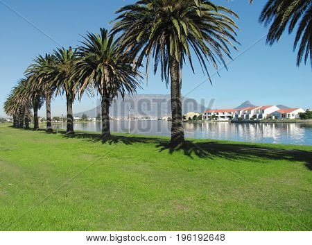 MILNERTON LAGOON, CAPE TOWN, SOUTH AFRICA, ON A CLEAR DAY, WITH A ROW OF PALM TREES AND TABLE MOUNTAIN IN THE BACK GROUND