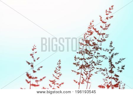 Blurred image of grass. Summer colorful abstract background.
