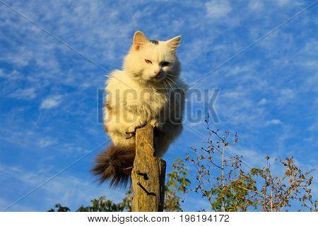 Cat sitting on a log against blue sky