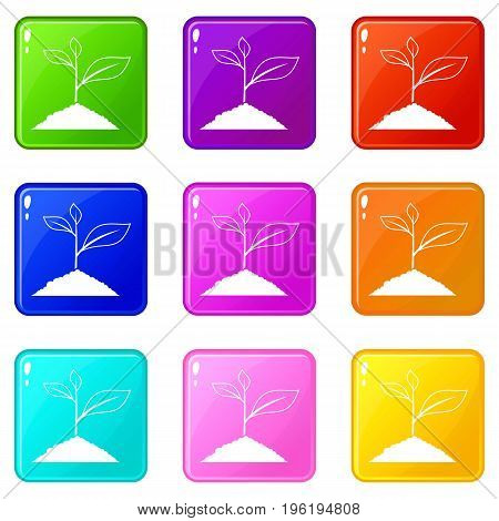 Growing plant icons of 9 color set isolated vector illustration