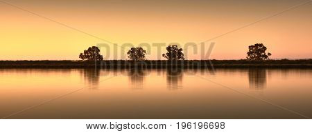 trees reflection in lake at the golden hour
