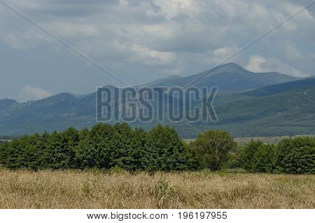 Majestic mountain top overgrown with forest, ripe  wheat  field and grass glade, Central Balkan mountain, Stara Planina, Bulgaria