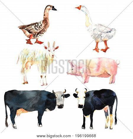 Farm animal set drawing in watercolor. Cow duck goat pig for your design.