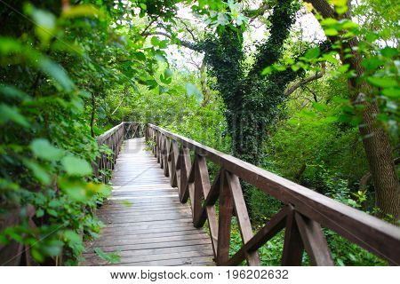 wooden bridge road in a rainforest landscape 1