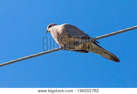 Dove on an electric wire on a blue sky background .