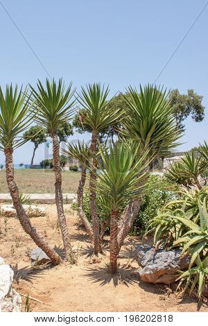 Landscaping With Palm Trees