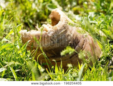 Torn off horse's hoof in the grass