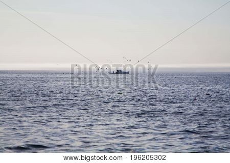 Seagulls around a fishing boat in Maine