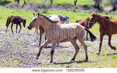 The horse walks on clay soil in the park .
