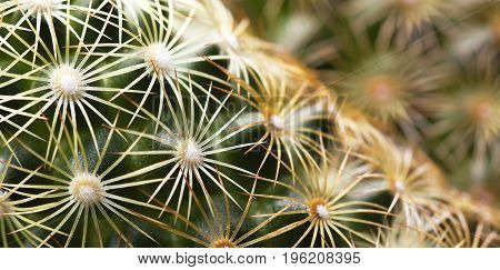 Web banner of green prickly cactus spikes