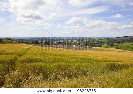 Hillside Barley Crop