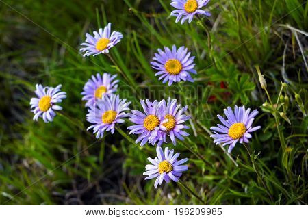 Flowers on a green glade, Plants in the wild nature
