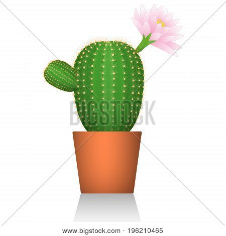 Cactus in a red clay pot. Flowering plant. White background. Isolated. Realistic picture. Vector illustration.