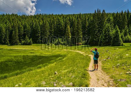 A tourist on a path in Durmitor National Park Montenegro