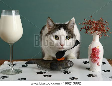 cat in pet restaurant with raw fish and milk in wine glass close up photo