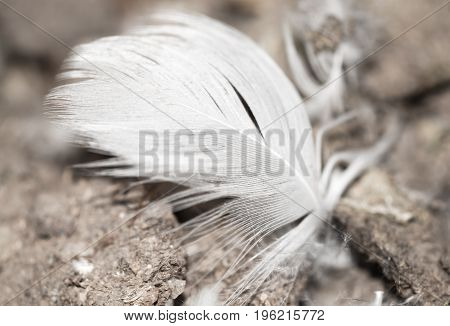 White duck feather lies on the ground .