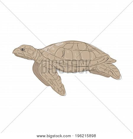 Illustration of a Hawksbill Sea Turtle swimming viewed from Side done in hand sketch Drawing style.