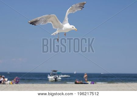 A seagull flying over a beach in summer.