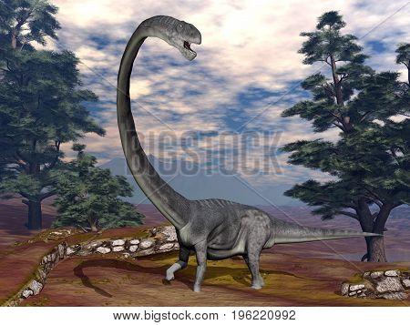 Omeisaurus dinosaur walking among pine trees - 3D render