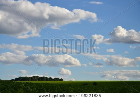 A Rural Landscape With A Green Field Of Late Sunflowers Under A Cloudy Blue Sky