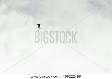 Pale Sky With A Bird Flying Over It. The Flight Of Bird. Concept Of Freedom, Simplicity And Minimali