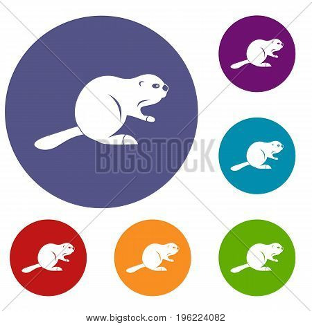 Canadian beaver icons set in flat circle red, blue and green color for web