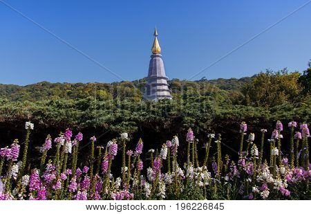 Beautiful Foxglove flowers with Pagoda at Doi Inthanon national park
