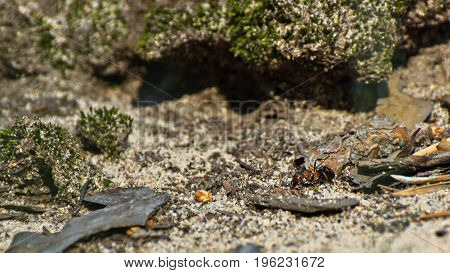 Macro image of a single ant crawling through the forest ground on a sunny summer day