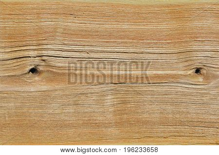 A close up of the surface of wood (Phellodendron amurense).