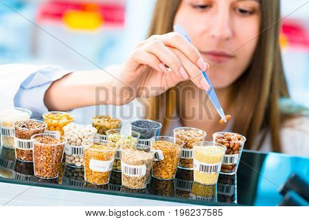 GMO research of cereals in laboratory