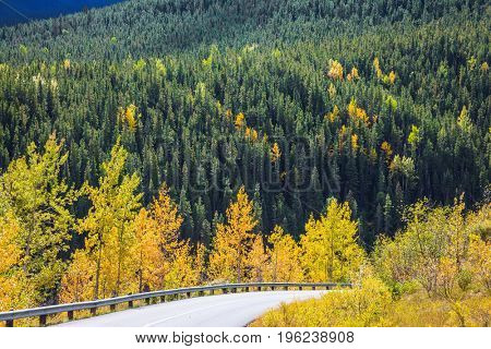 Dense evergreen and deciduous forests.The road in magnificent Rocky Mountains. The warm Indian summer in October. The concept of active tourism