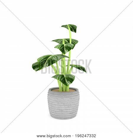 houseplant in green on isolated white in 3D rendering