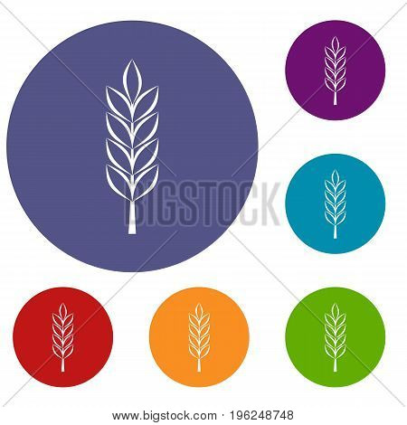 Wheat spike icons set in flat circle red, blue and green color for web